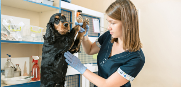 dog and veterinarian doctor at vet clinic